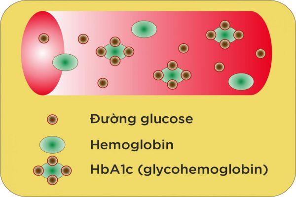 Vì sao chỉ số HbA1c lại rất quan trọng với bệnh nhân mắc tiểu đường